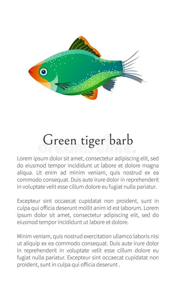 Green Tiger Barb Aquarium Fish Isolated on White. Green tiger barb isolated on white. Freshwater aquarium fish silhouette hand drawn graphic icon on blank royalty free illustration
