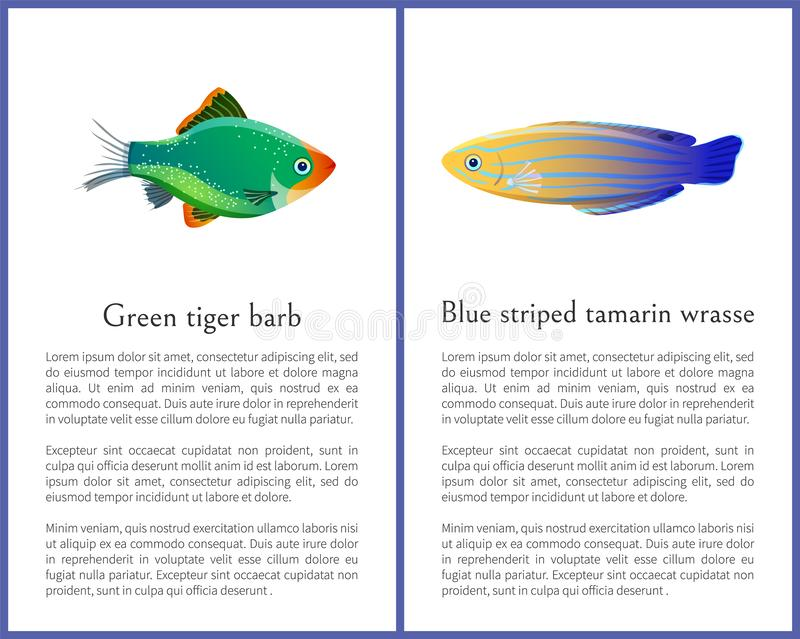 Green Tiger Barb and Blue Striped Tamarin Fishes. Isolated on white background ocean citizen with flexible paddles and sparkling multicolored skin royalty free illustration