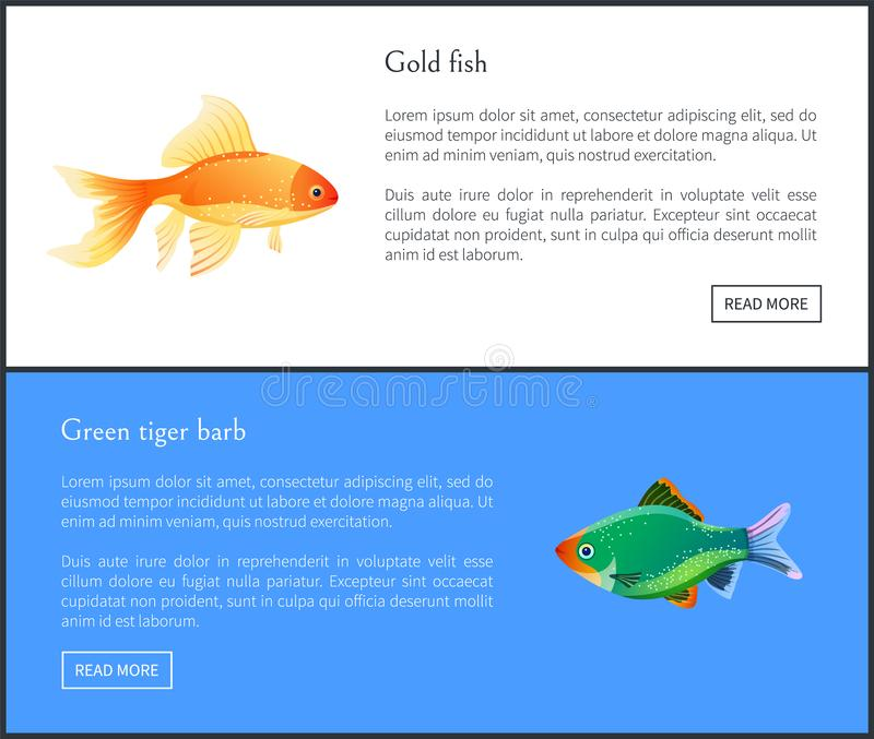 Green Tiger Barb, Goldfish Double Color Fond. Green tiger barb and goldfish double color fond. Freshwater aquarium fish silhouette icon on blank background in stock illustration