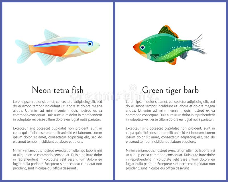 Green Tiger Barb and Neon Tetra Fishes Posters. Isolated on white backgrounds, vector illustration of varicoloured exotic water habitants, text sample royalty free illustration