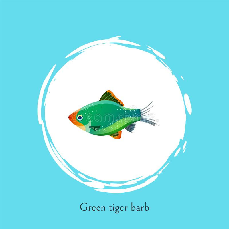 Green Tiger Barb in White Circle Isolated on Blue. Freshwater aquarium fish silhouette icon on double color background cartoon vector illustration royalty free illustration