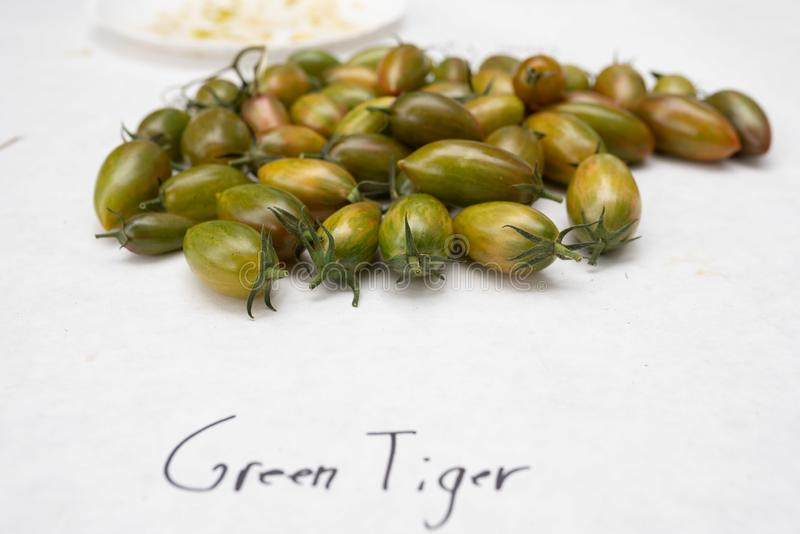 Green tiger tomatoes on the white table royalty free stock photos