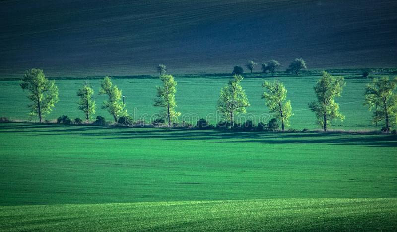 Green and tirquoise spring field abstract background royalty free stock image