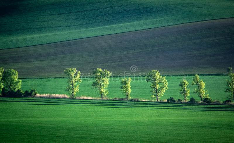 Green and tirquoise spring field abstract background stock photo