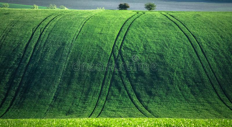 Green and tirquoise spring field abstract background royalty free stock images