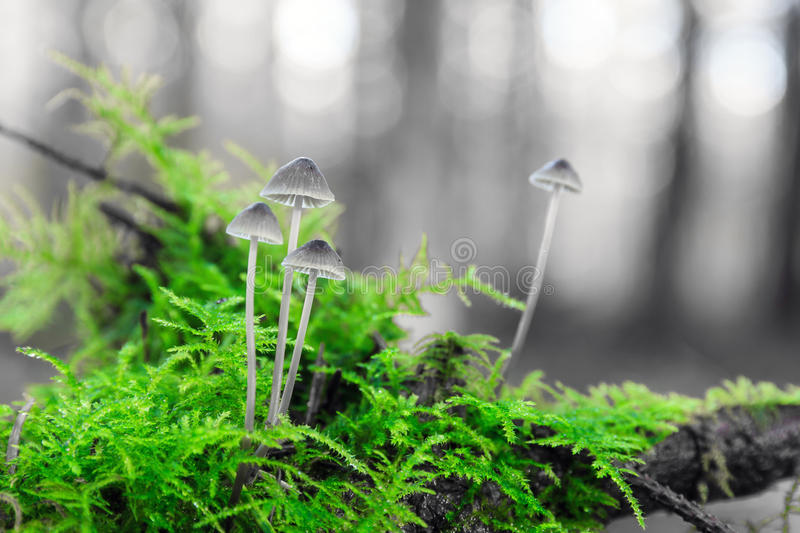 Green toadstools stock photography