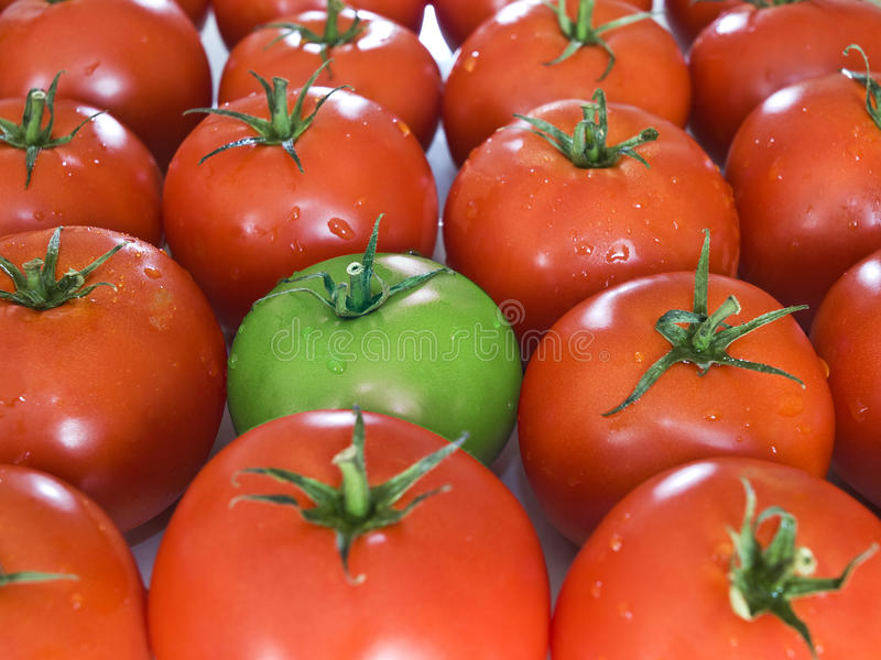 Green tomato between his normal rad mates. royalty free stock images