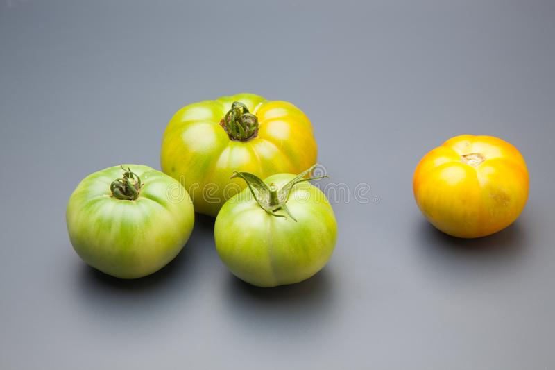 Green tomato on plain background, healthy food. Green tomato, waiting to be matured artificially, on a plain background, healthy food, tomato that is still to royalty free stock image