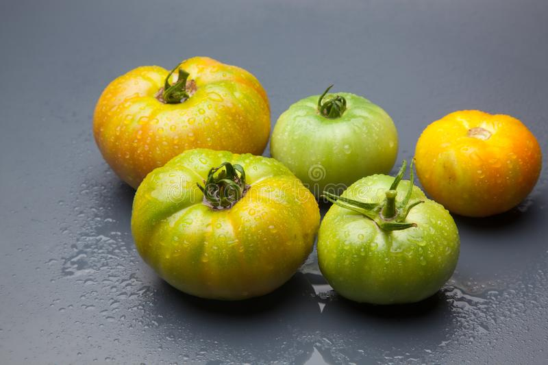 Green tomato on plain background, healthy food. Green tomato, waiting to be matured artificially, on a plain background, healthy food, tomato that is still to royalty free stock images