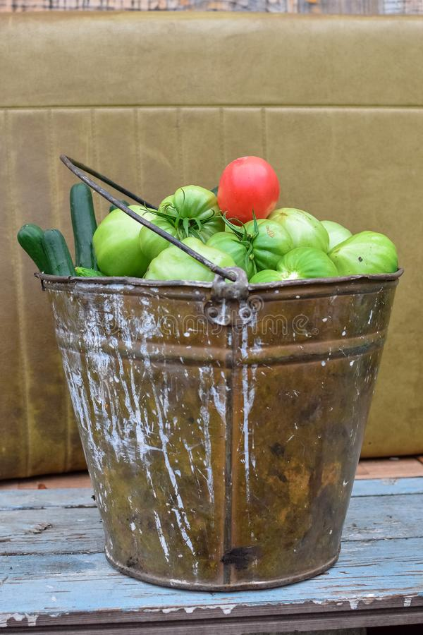 Green tomatoes and one red in an old painted metal bucket with green cucumbers royalty free stock images