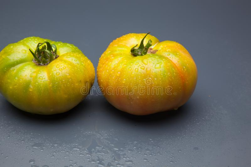 Green tomatoes on plain background. Organic tomatoes, grown without chemicals or pesticides, green tomatoes on a plain background. There are people who like to royalty free stock photo