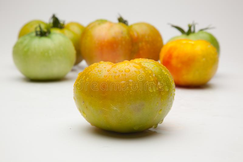 Green tomatoes on plain background. Organic tomatoes, grown without chemicals or pesticides, green tomatoes on a plain background. There are people who like to royalty free stock photography