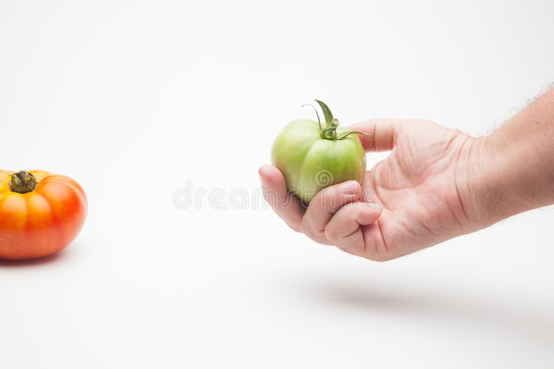 Green tomatoes on plain background. Organic tomatoes, grown without chemicals or pesticides, green tomatoes on a plain background. There are people who like to stock photo