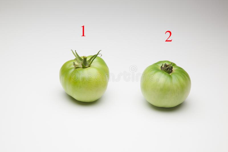 Green tomatoes on plain background. Organic tomatoes, grown without chemicals or pesticides, green tomatoes on a plain background. There are people who like to stock images
