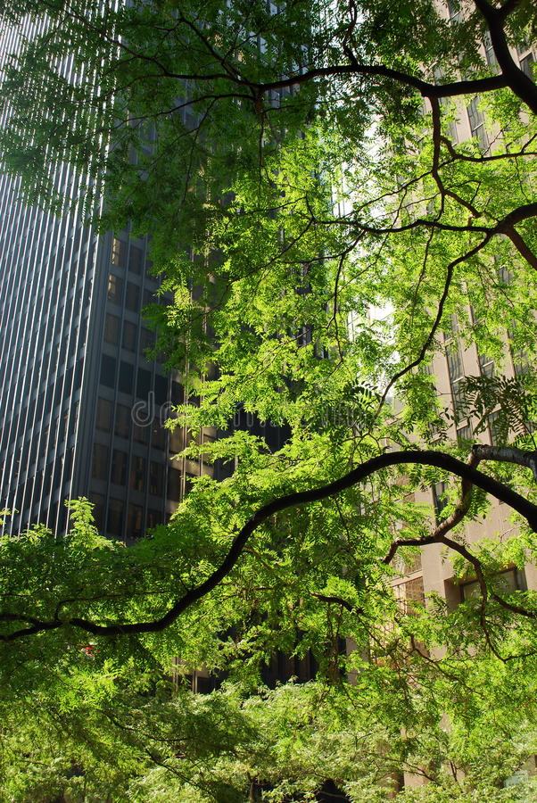 Download Green Toronto stock image. Image of downtown, canada - 11071029