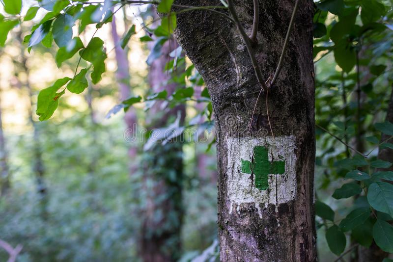 Green tourist sign in deciduous woods , shallow depth of field. Copy space stock photos