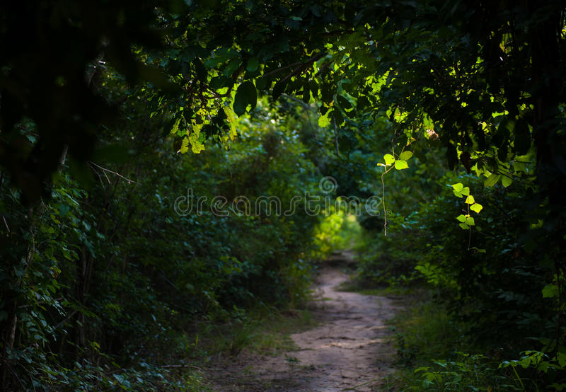 Green trails royalty free stock photography