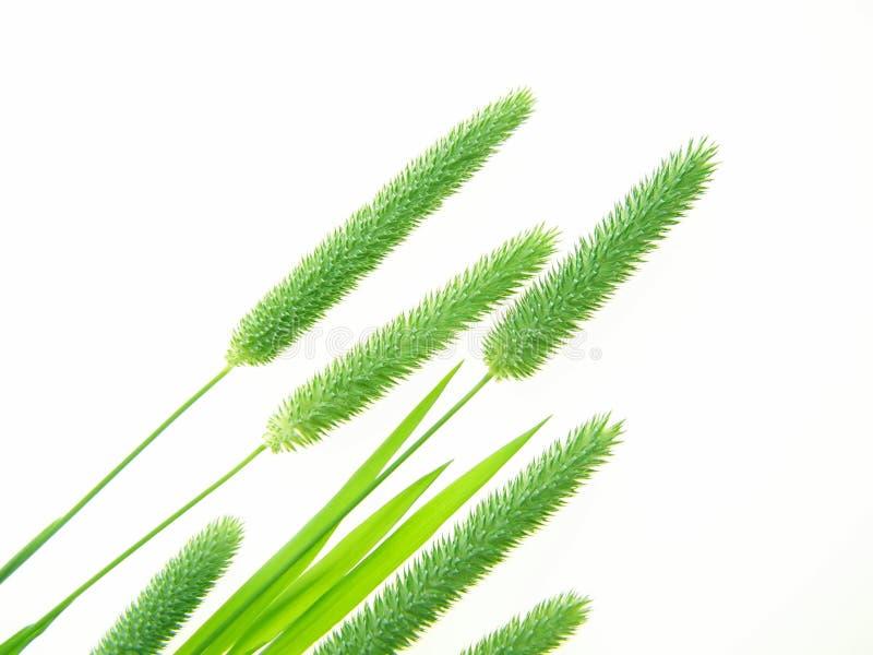 green trawy obrazy stock
