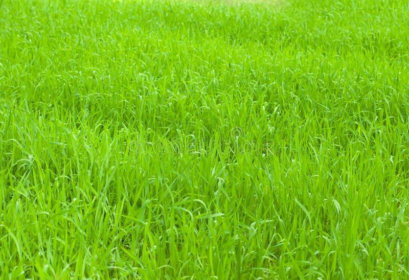 green trawy obraz stock