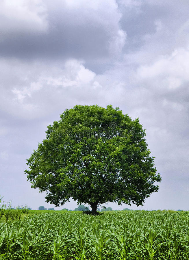 Download Green Tree stock photo. Image of nature, clouds, green - 12026416