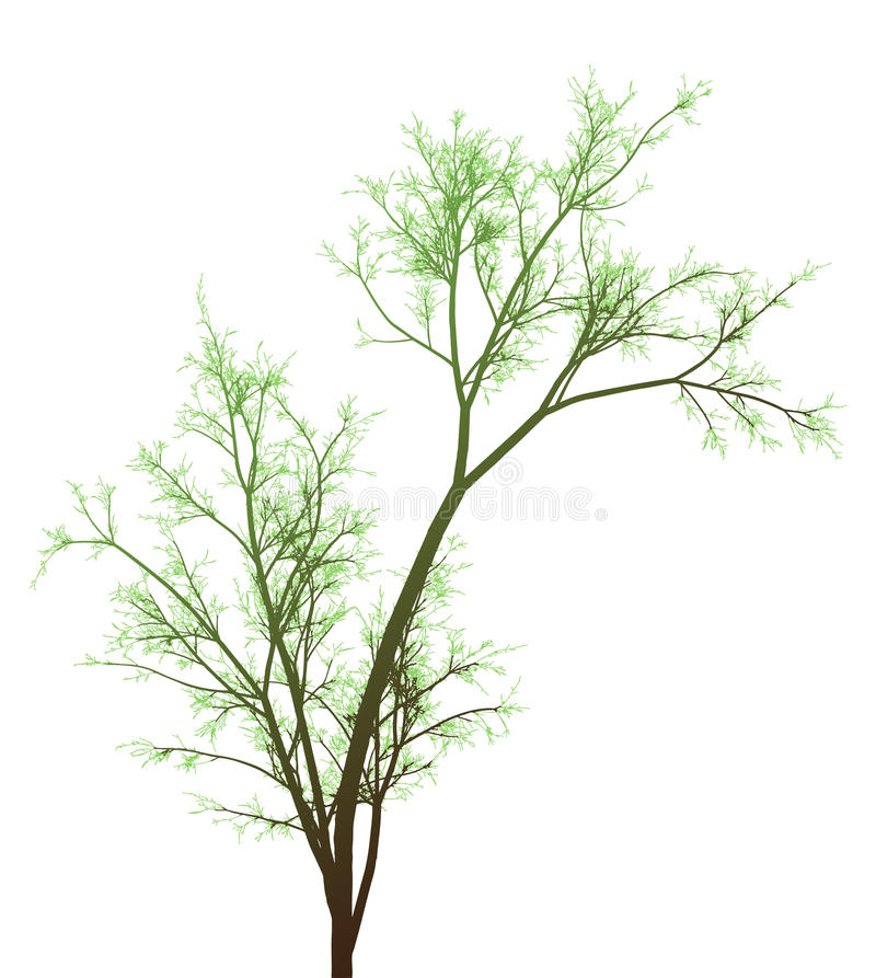Download Green Tree stock vector. Image of branch, bush, graphic - 20316548