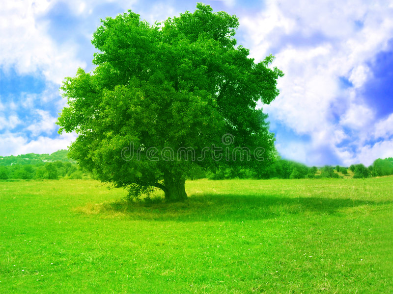Green tree. A young tree alone in a meadow with bright blue sky royalty free stock images