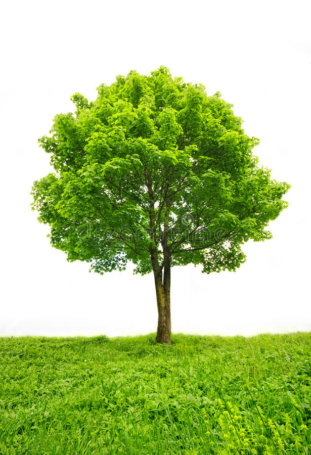 Download Green tree stock photo. Image of lawn, beautiful, scenery - 29240484
