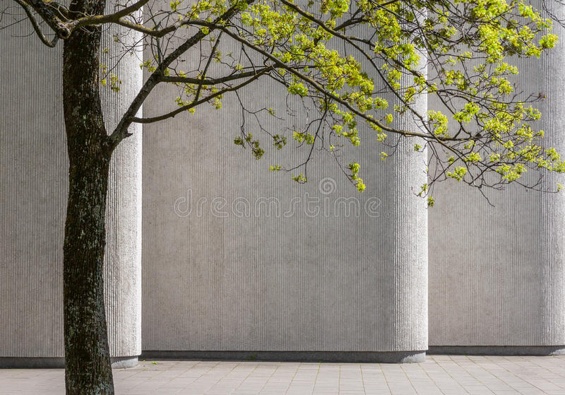 Green tree against building wall. Green tree in springtime against background of concrete building wall royalty free stock image