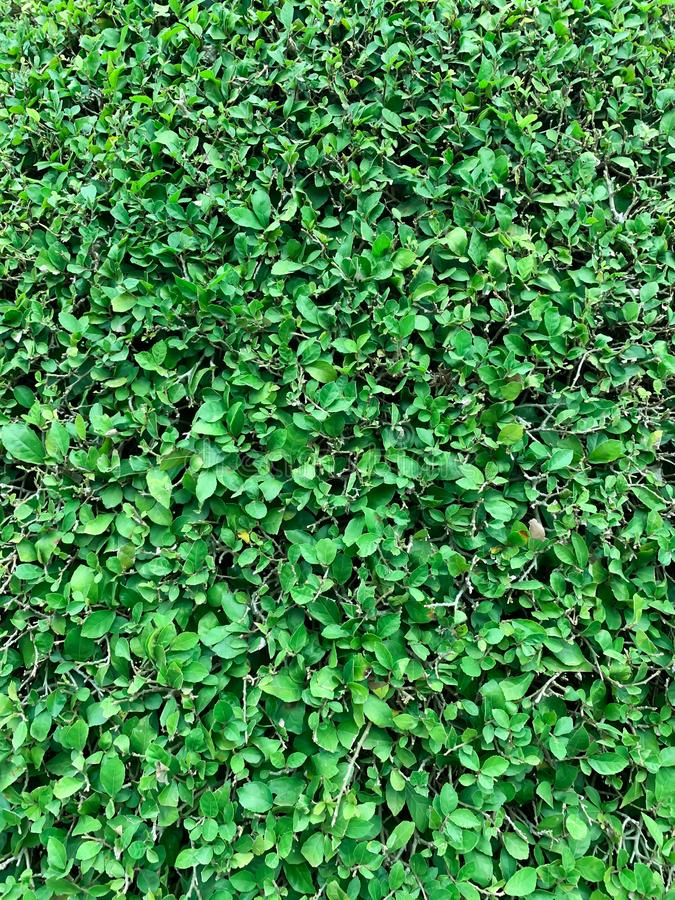 Green tree background royalty free stock photo