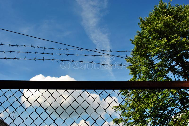 Green tree behind jail barbed wire grid fence, spring sunny landscape with blue cloudy sky stock photos