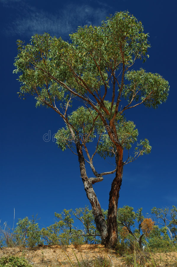 Download Green tree on a blue sky stock image. Image of height, flora - 453757