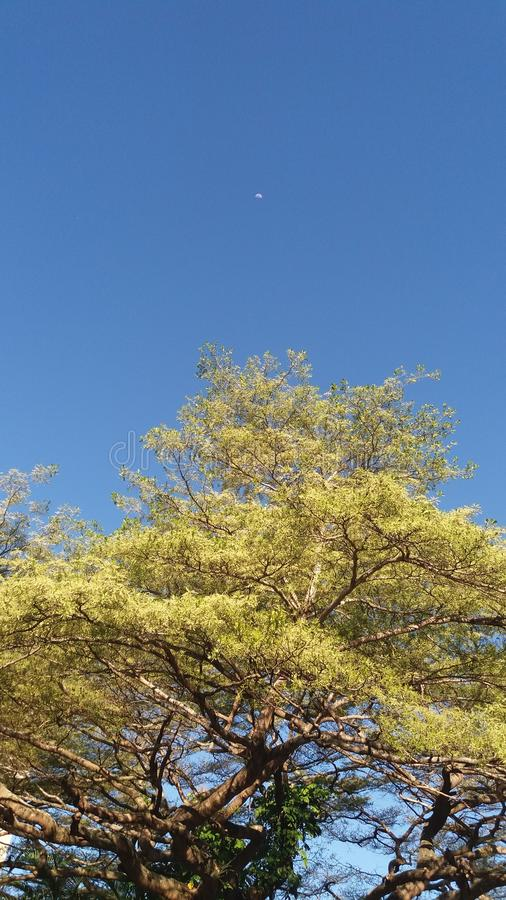 Green tree and Blue sky royalty free stock image
