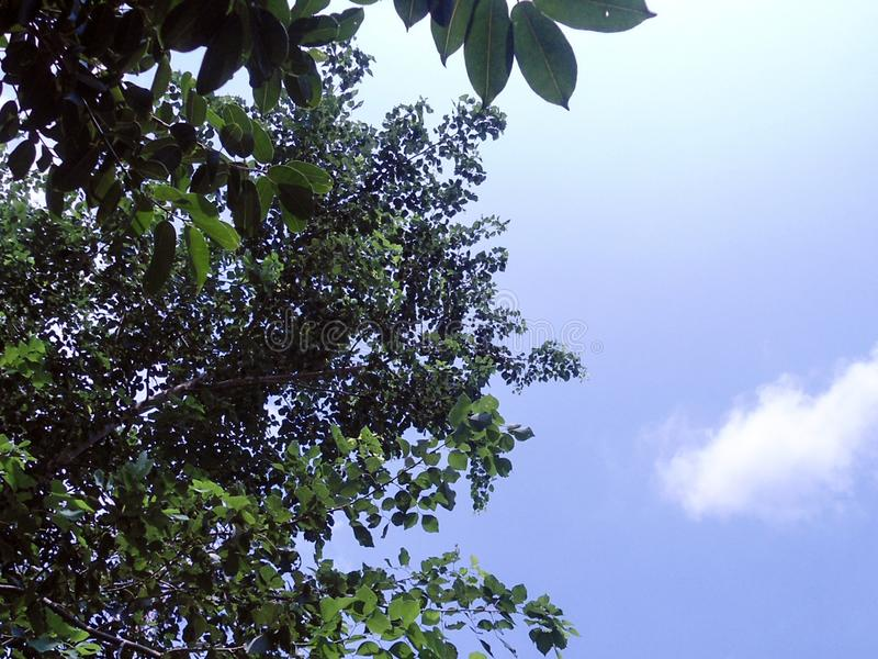 The green tree with blue sky royalty free stock photography
