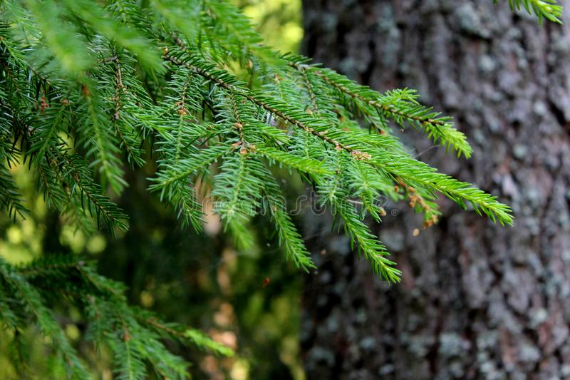 Green tree branch on the background of the tree trunk stock photography