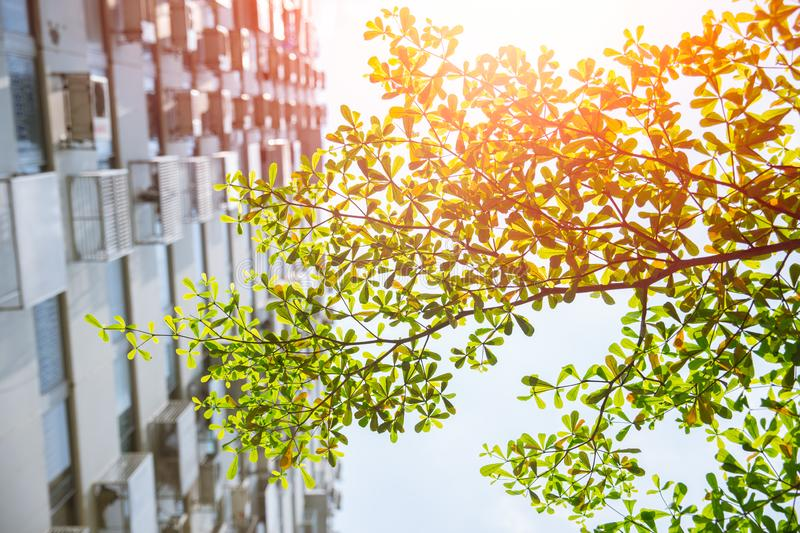 Green tree in the city high rise apartment summer season. Green tree in the city high rise apartment for fresh clean cool air pollution concept stock image