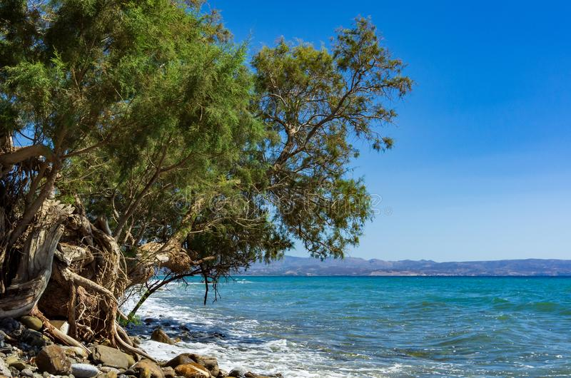 Green tree at the coast in the south of Crete stock images