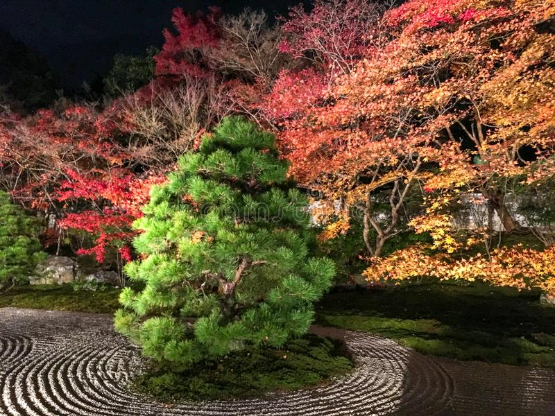 Green tree and colorful maple trees in zen stone garden in japanese temple stock images