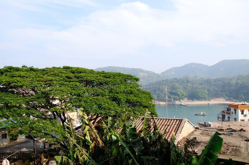 Green tree in dongao island royalty free stock photos