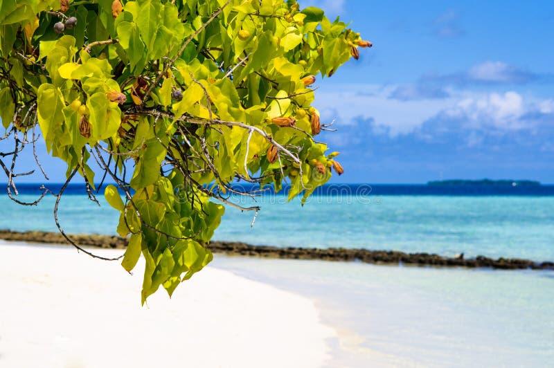 Green tree foliage at white sand beach on tropical paradise Maldives island stock image