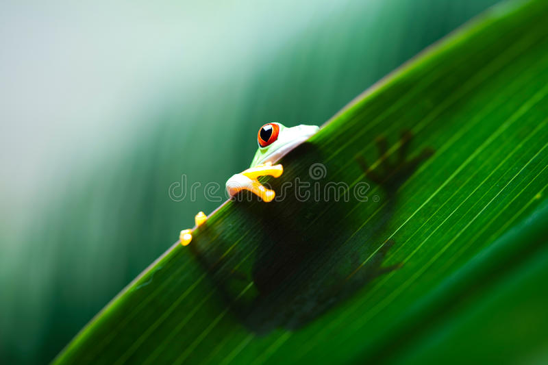 Green tree frog on colorful background.  royalty free stock photo