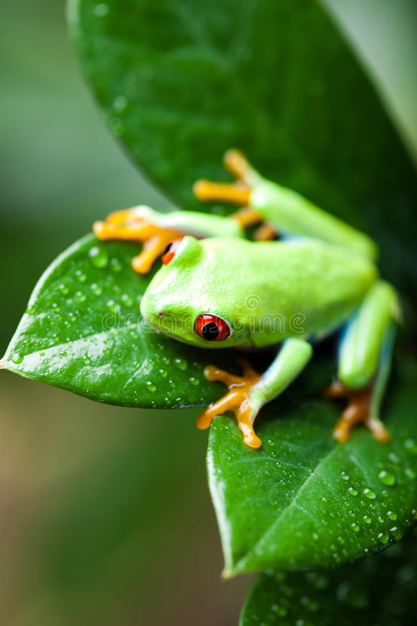 Green tree frog on colorful background.  royalty free stock photos