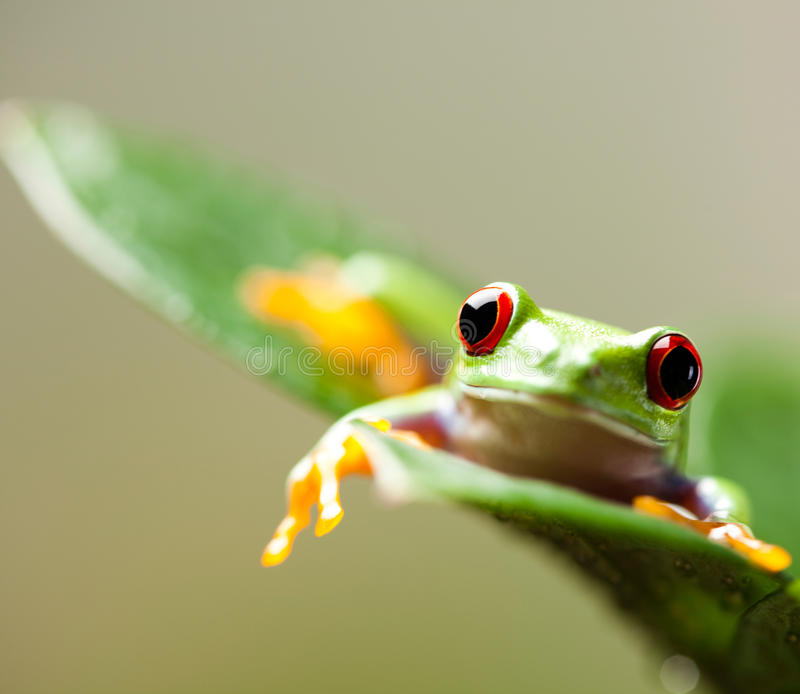 Green tree frog on colorful background.  stock photos