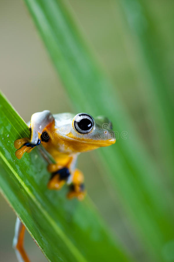 Green tree frog on colorful background.  royalty free stock photography