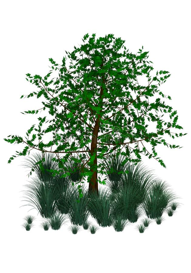 Green tree and grass royalty free stock images
