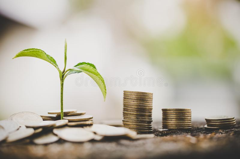 Green tree growing on money coins, ,saving, growth, sustainable development, economic concept royalty free stock photos