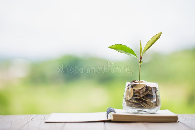 Green tree growing on money coins, ,saving, growth, sustainable development, economic concept.  royalty free stock photos