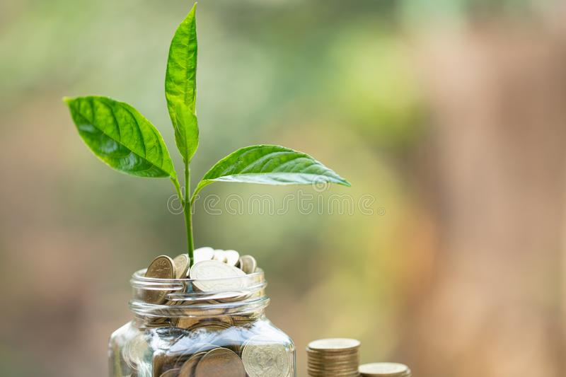 Green tree growing on money coins, ,saving, growth, sustainable development, economic concept.  royalty free stock images