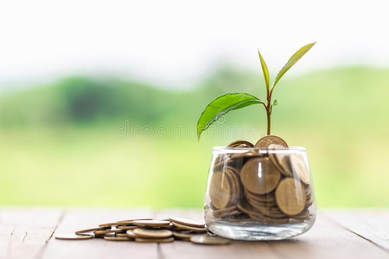 Green tree growing on money coins, ,saving, growth, sustainable development, economic concept stock images