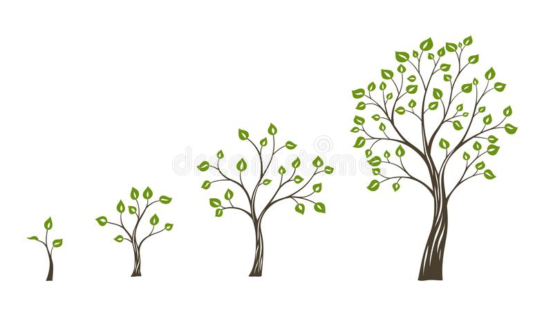 Green tree growth eco concept. Tree life cycle vector illustration