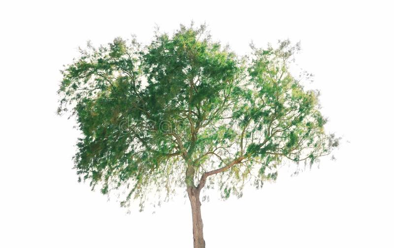 Green tree isolated on white background. Green tree isolated on a white background royalty free stock photos